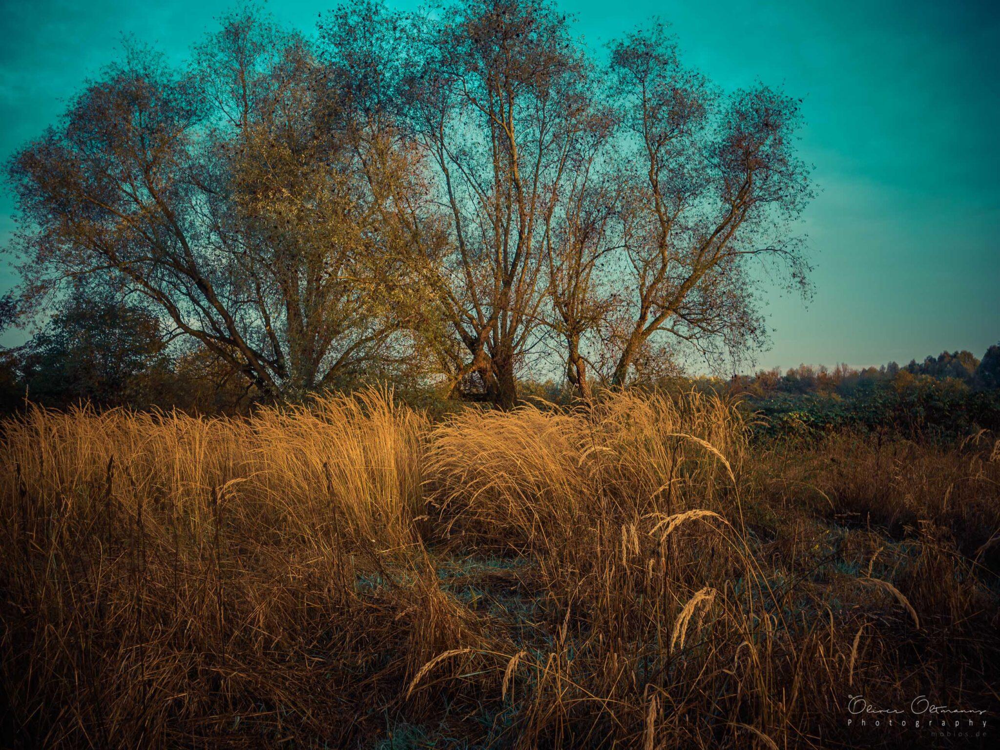 Herbstmorgen am Gisnterpfad