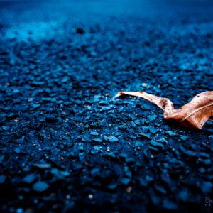 Lonesome Leaf
