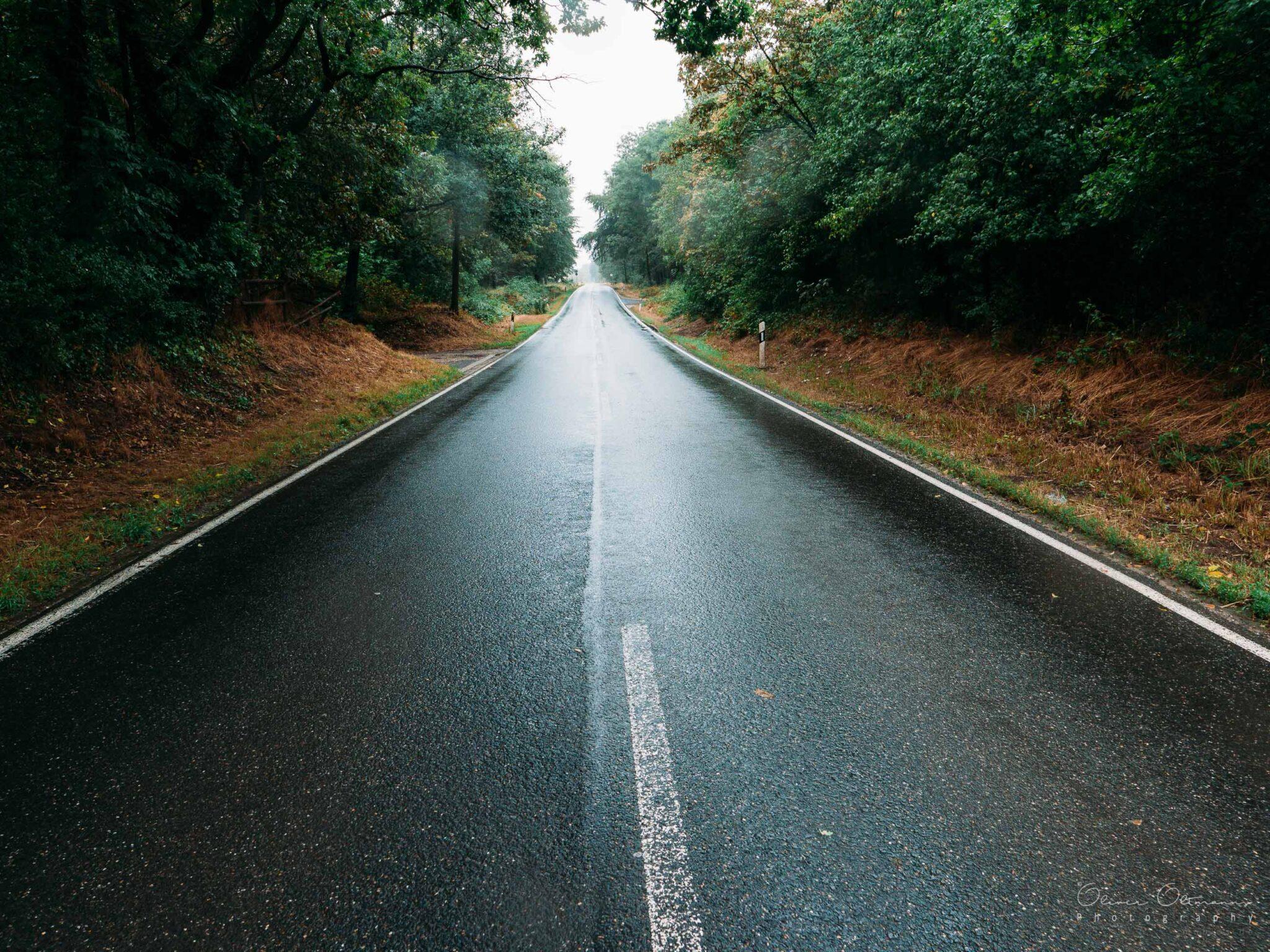 Strasse durch Morschenicher Wald