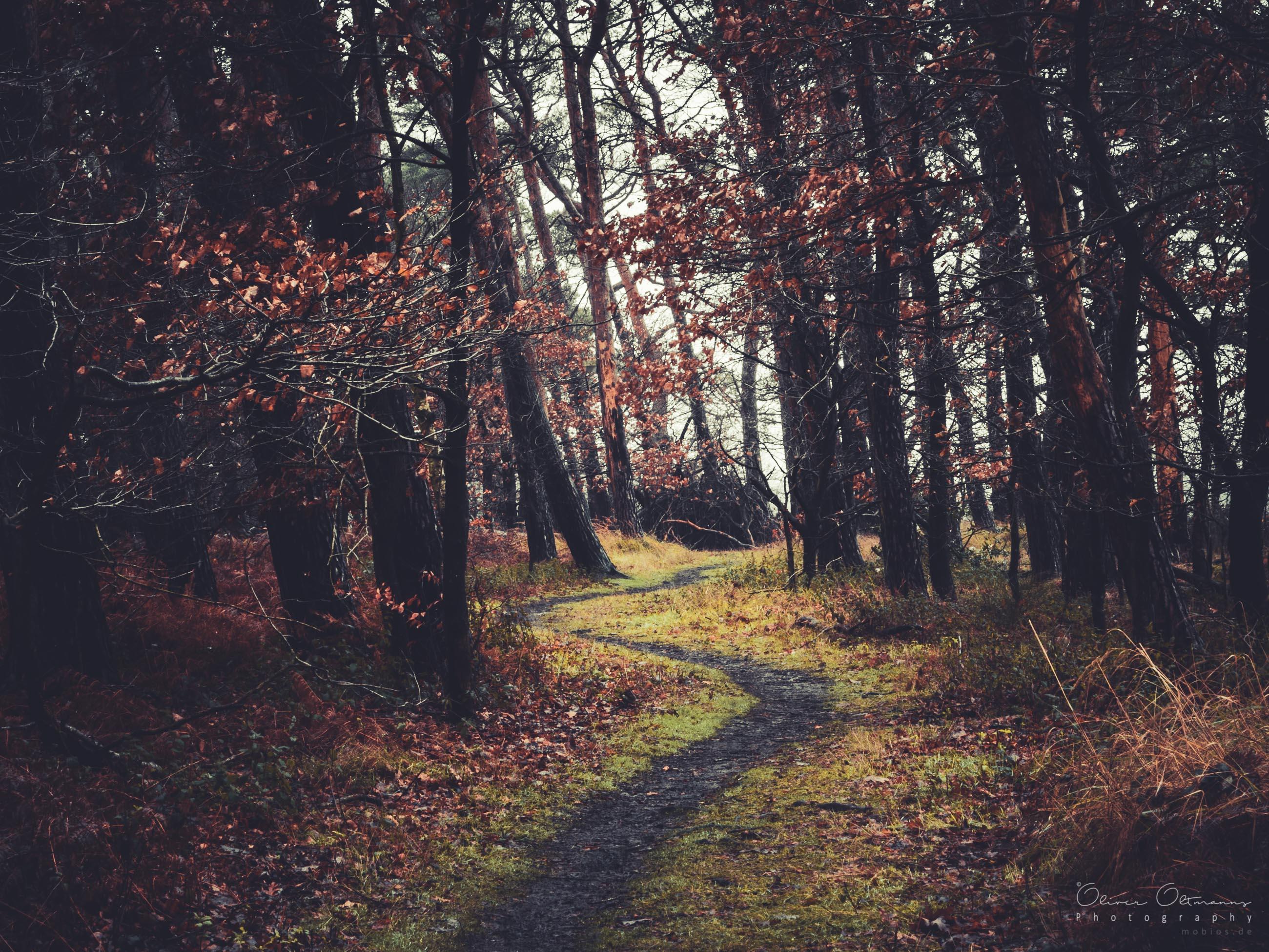 Lass mich dich mitnehmen, auf eine Reise durch meinen Heimatwald Morschenich